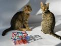 Naše dvě kočky - modelky